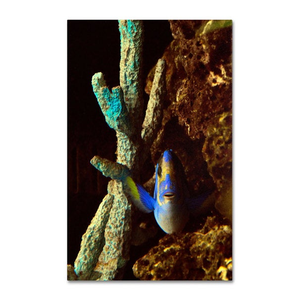 Kurt Shaffer 'Fish in the Rocks' Canvas Art