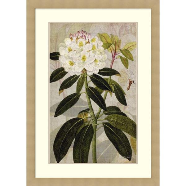 John Butler 'Rhododendron I' Framed Art Print 30 x 42-inch