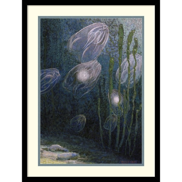 William H. Crowder 'Rainbow-jellies, Mnemiopsis leidyi, floating in water, 1926' Framed Art Print 19 x 25-inch 16063615