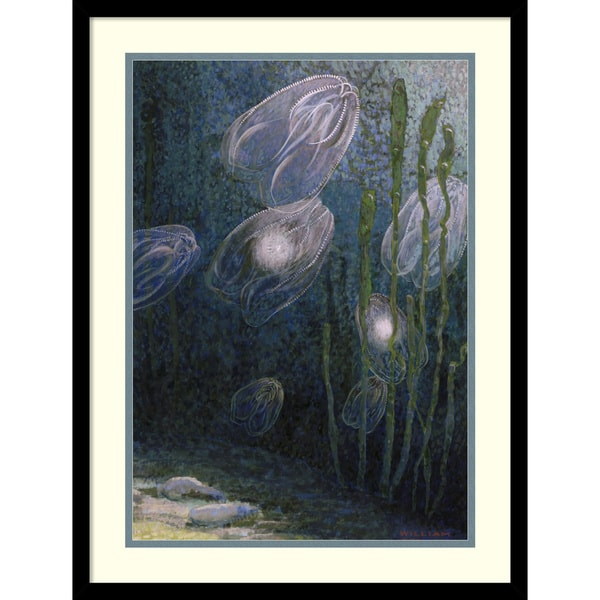 William H. Crowder 'Rainbow-jellies, Mnemiopsis leidyi, floating in water, 1926' Framed Art Print 19 x 25-inch