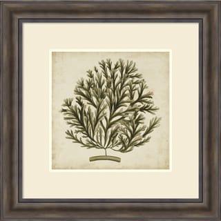 Georg C. Oeder 'Vintage Seaweed I' Framed Art Print 30 x 30-inch