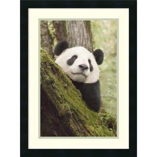 Katherine Feng 'Xiang Xiang, first captive raised panda to be released into the wild, China' Framed Art Print 18 x 24-inch