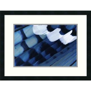Rolf Nussbaumer 'Blue Jay Feathers, Texas' Framed Art Print 26 x 20-inch
