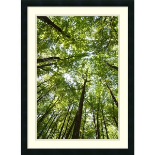 Michael Hudson 'Woods, Shenandoah National Park' Framed Art Print 22 x 30-inch