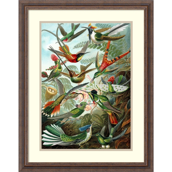 Ernst Haeckel 'Example from the family Trochilidae, 'Kunstformen der Natur', 1899' Framed Art Print 21 x 26-inch