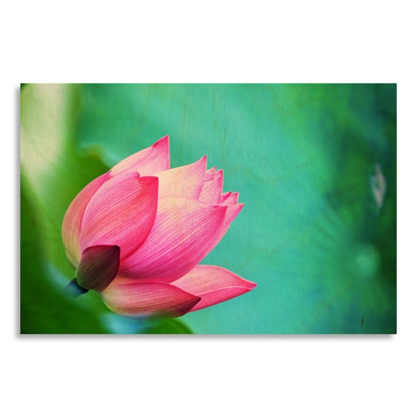 'beautiful pink waterlily or lotus flower in pond'