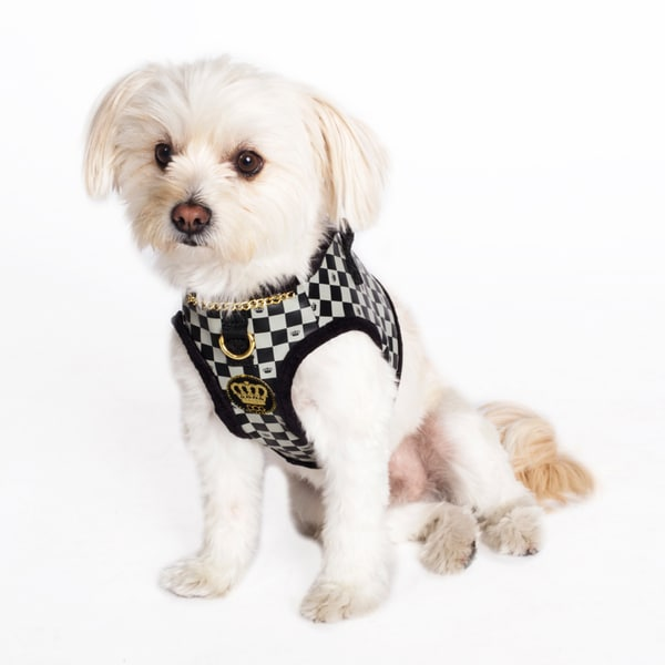 Dogs of Glamour Check and Chain Harness