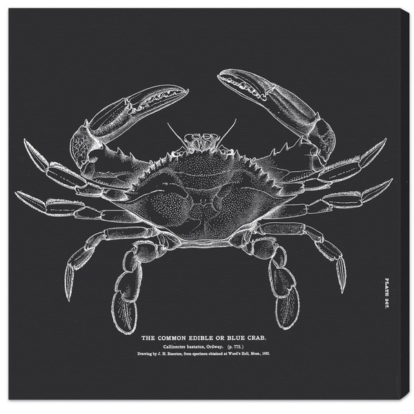Blakely Home 'The Common Blue Crab' Canvas Art