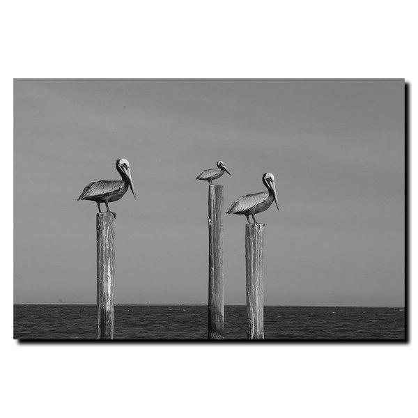 Cary Hahn 'Pelicans at Bay' Canvas Wall Art