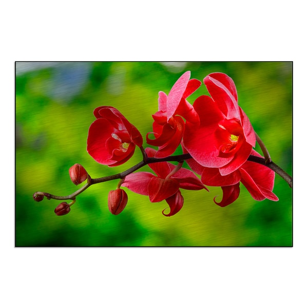 'red orchid flower on blur background' Mounted Metal