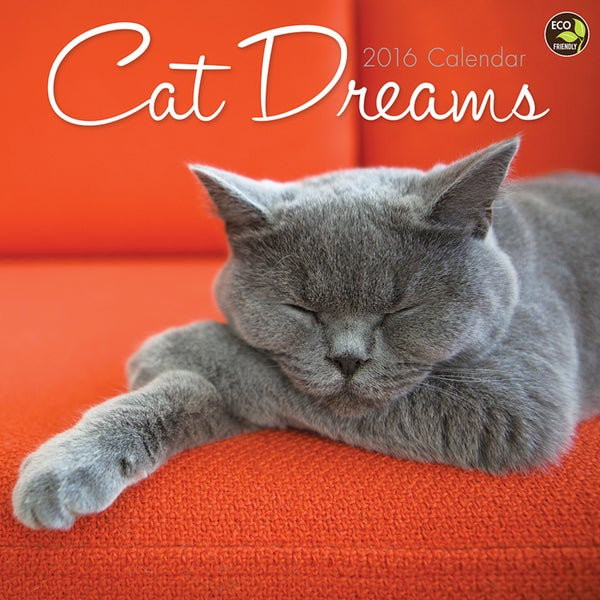 2016 Cat Dreams Wall Calendar
