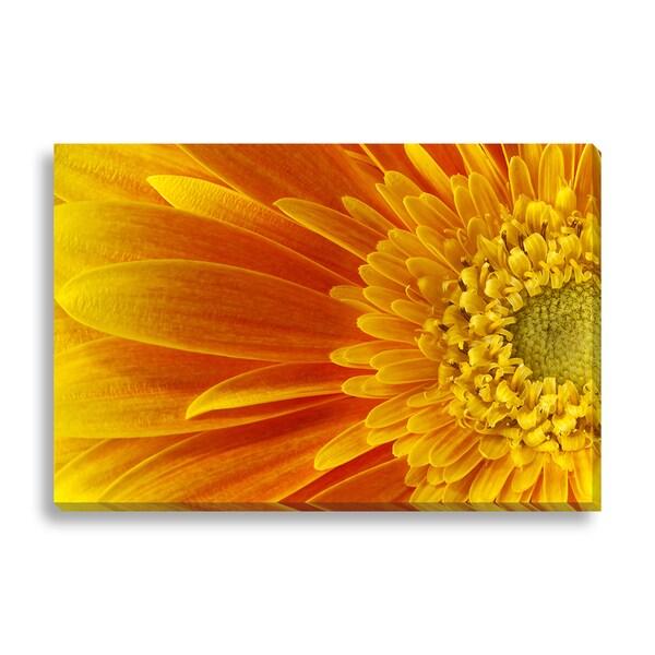 'gerbera flower' Canvas Gallery Wrap