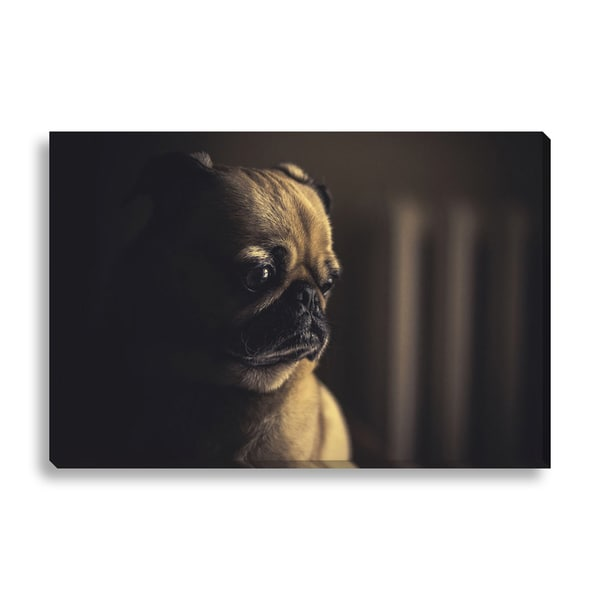 New Era Photography 'Pug Face' Canvas Gallery Wrap