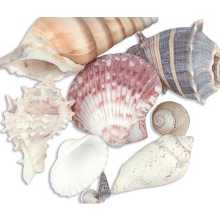 Sea Shell Mixes 10/PkgNatural