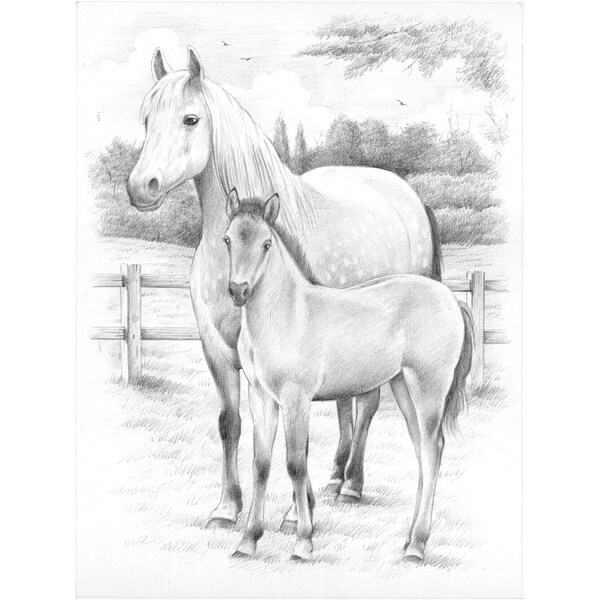Sketching By Number Kit 8inX12inHorse & Foal