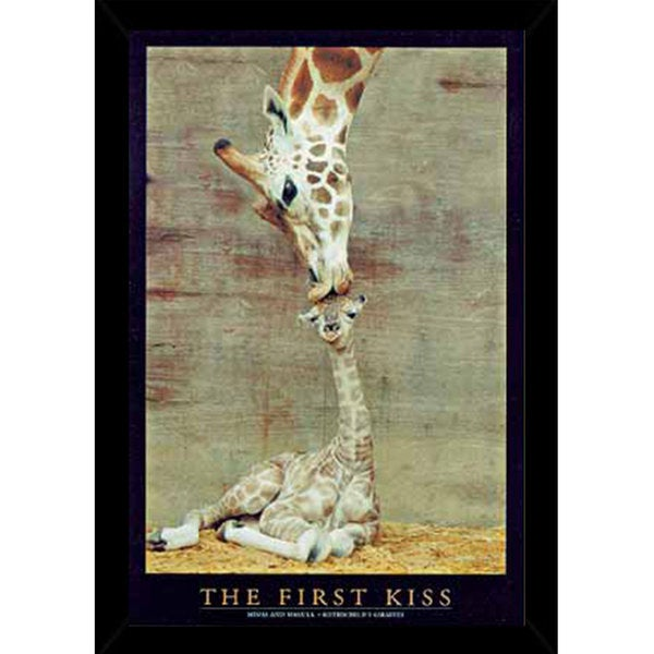 First Kiss Poster (24-inch x 36-inch) on Plaque or Woodmount