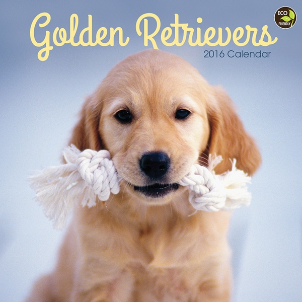 2016 Golden Retrievers Wall Calendar