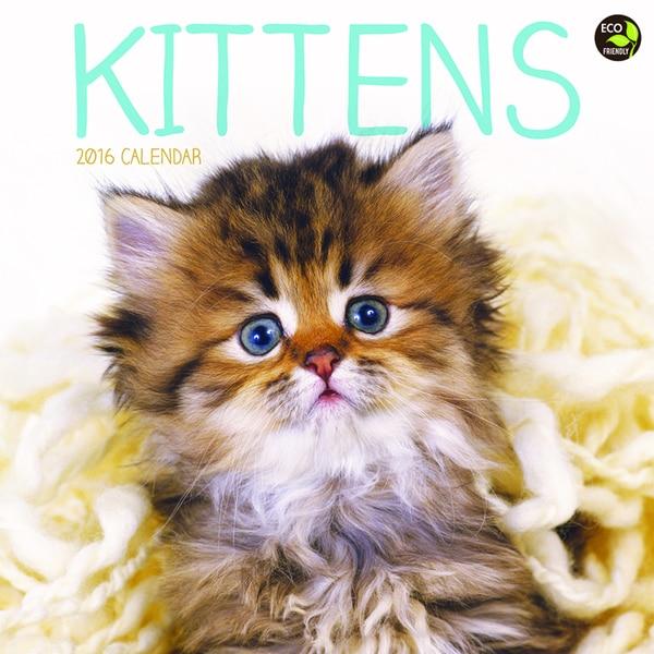 2016 Kittens Wall Calendar