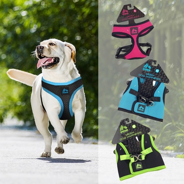 RBX Nylon Dog Harness