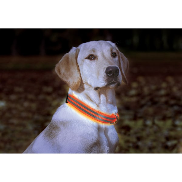 Animal Planet Adjustable LED Dog Collar