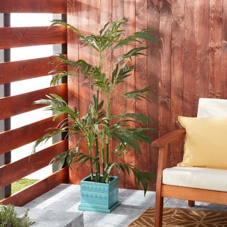 6-foot Kentia Tree with Bamboo Planter