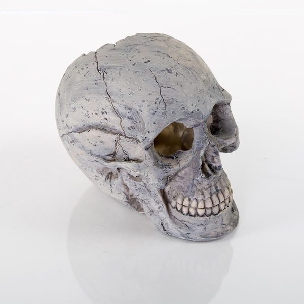 BioBubble Decorative Human Skull