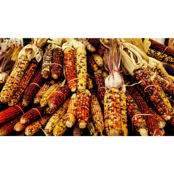 Wall Decor Prints 'Mixed Corn' Print Wall Art