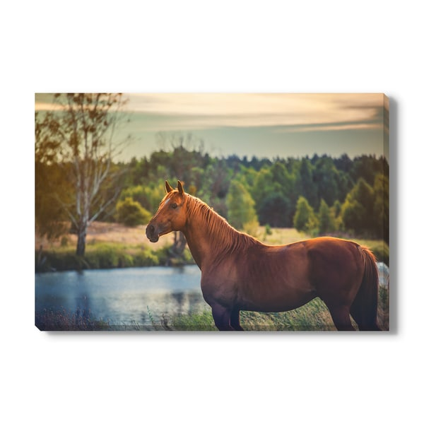 horse Print on Canvas Gallery Wrap