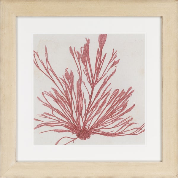 "Seaweed Kiedis Square Framed Giclee on Paper 24"" x 24"""