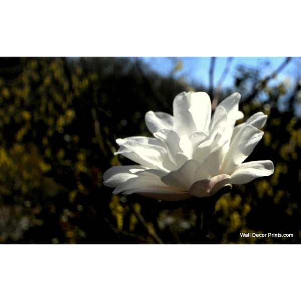 White Bloom Print Wall Art