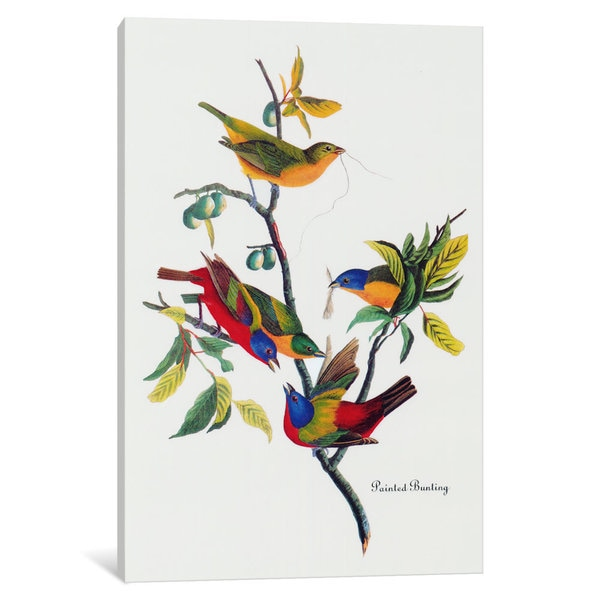 iCanvas Painted Bunting by John James Audubon Canvas Print