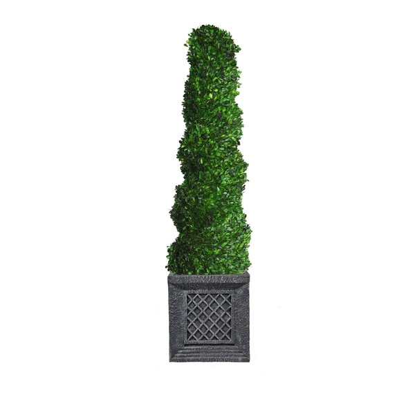 56-inch Tall Preserved Natural Spiral Boxwood Topiary in Planter