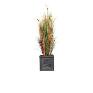 66-inch Tall Onion Grass with Cattail in Planter