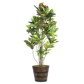 80-inch Tall Croton Tree with Multiple Trunks in Planter