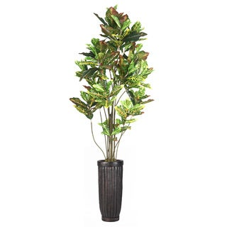 93-inch Tall Croton Tree with Multiple Trunks in Planter