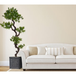 54-inch Tall Yacca Tree in Planter