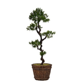 56-inch Tall Yacca Tree in Planter