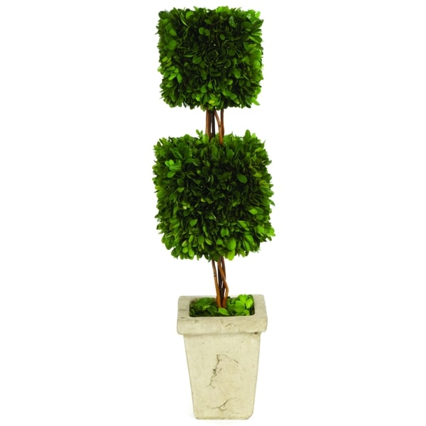 Boxwood Double Square Topiary