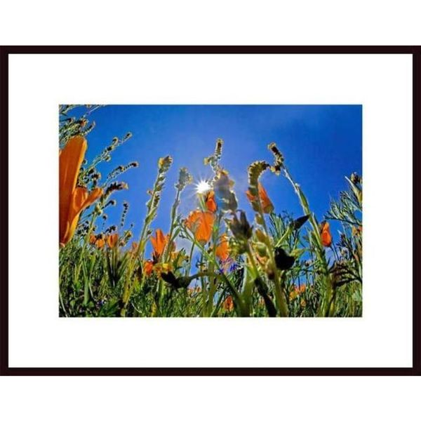 John Nakata 'Wildflower Forest' Framed Art