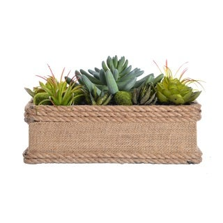 Laura Ashley 5-inch Succulents in Hemp Rope Planter