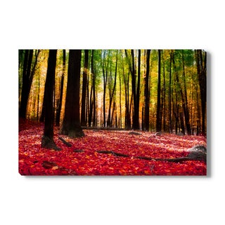 Forest in Autumn with Golden Light on Canvas Gallery Wrap