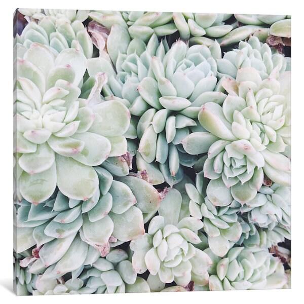 iCanvas Primrose Green by Chelsea Victoria Canvas Print