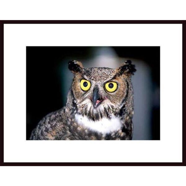 John Nakata 'Great Horned Owl' Framed Art