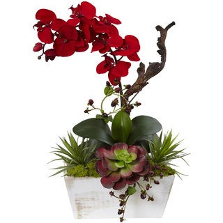 Seasonal Orchid & Succulent Garden with White Wash Planter