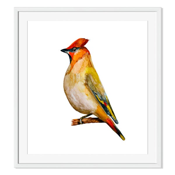 watercolor painting bird. vector illustration Print on Paper Framed Print