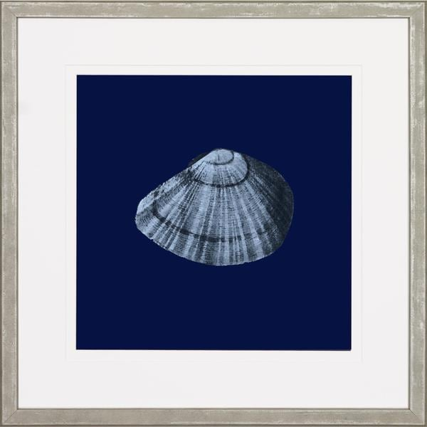 Midnight Shells Framed Art Print II