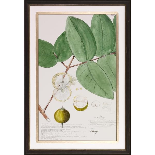 Descube Fruit Framed Art Print II