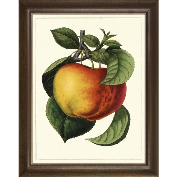 Fruit Studies Framed Art Print I