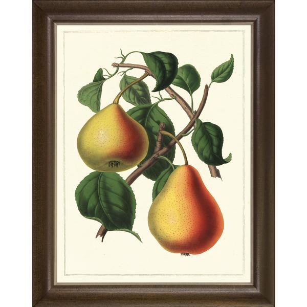 Fruit Studies Framed Art Print III