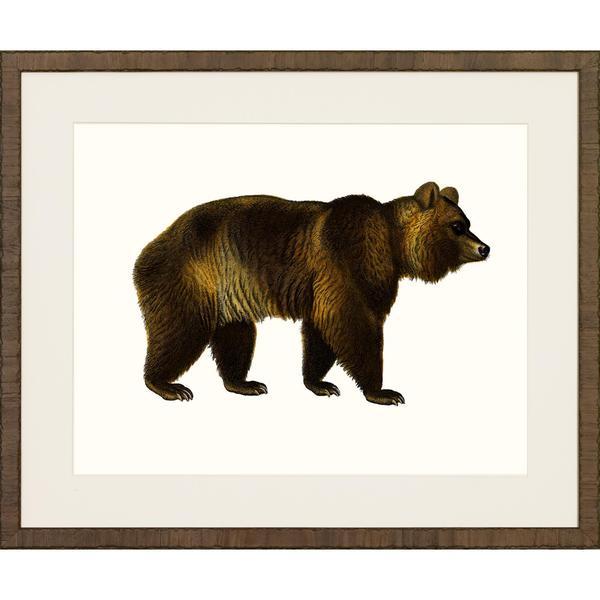 American Mammals Framed Art Print II